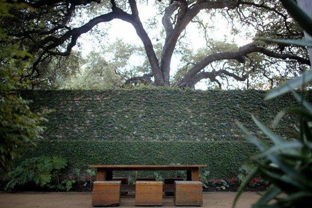 arbol crea efecto paz tranquilida espacio natural
