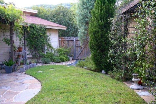 árbol jardin trasero natural verde