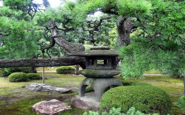arbol jardín zen rocas cesped