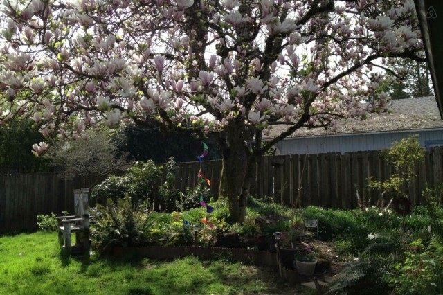 árbol magnolia sombra flores rosa