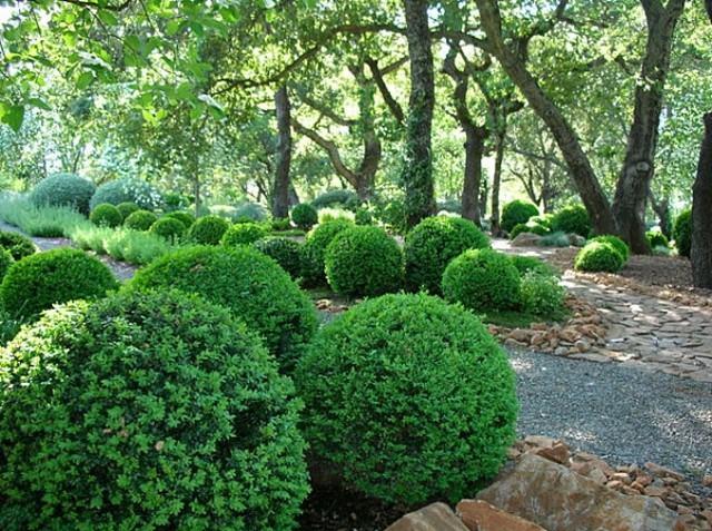 árbole arbustos decoracion crea sombra jardin