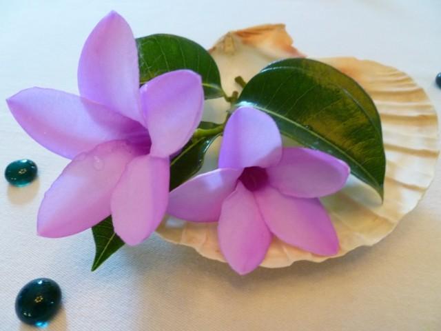 arreglo centro mesa concha flor