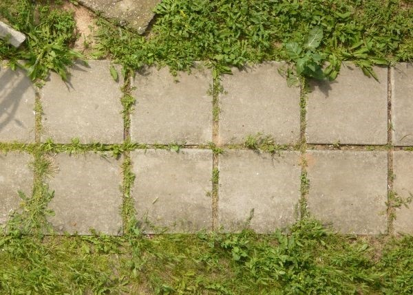 baldosas cuadradas iguales paralelas césped
