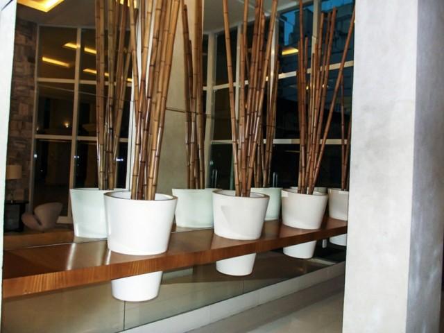 bambú macetas blancas idea genial bonito