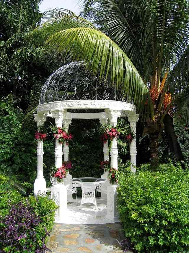 bella blanca ovalada palmera preciosa jardin