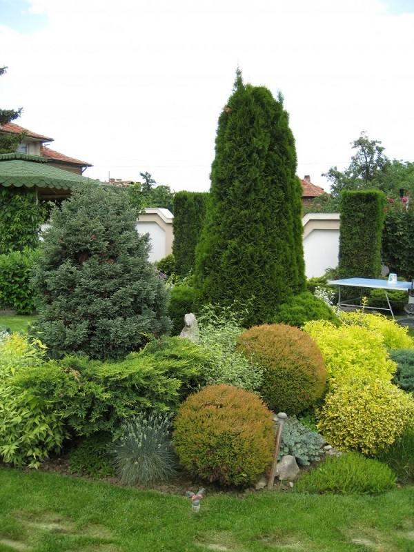 paisajismo jardinería  arbustos varios