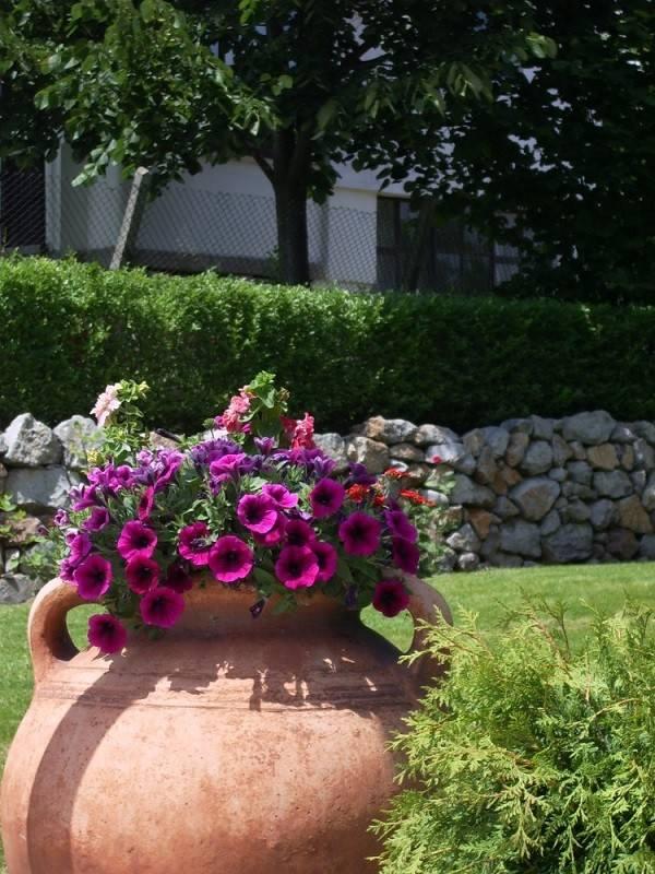 botijo barro flores moradas violetas