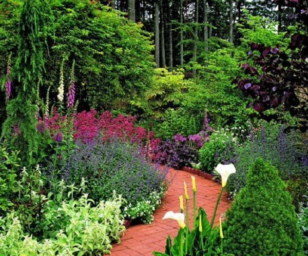 camino rodeado plantas flores color ocre bosque