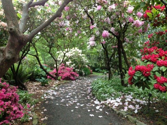 caminos piedras flores bosque árboles