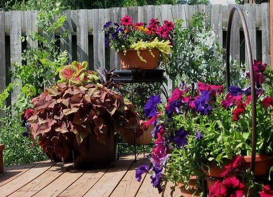 Plantas de exterior, ideas para un jardín de ensueño!