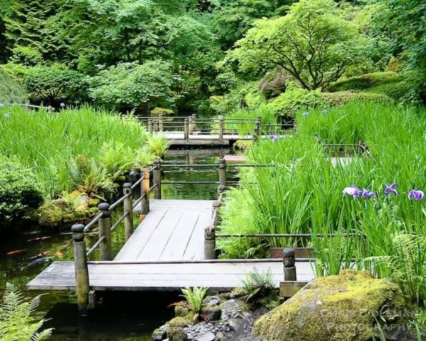 estanque grande puente madera plataforma