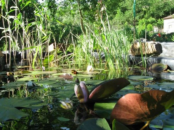 estanque mucha naturaleza plantas filtro
