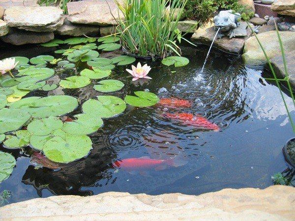 Estanque de jard n ideas para decoraci n for Mini pond con pesci