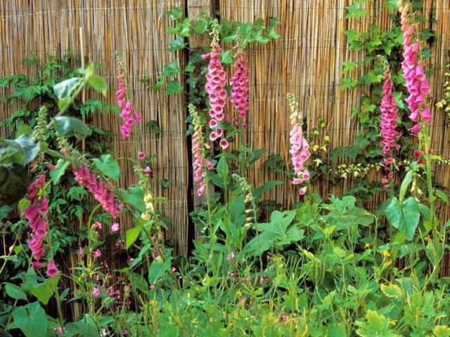 flores bambu plantas patio plantas