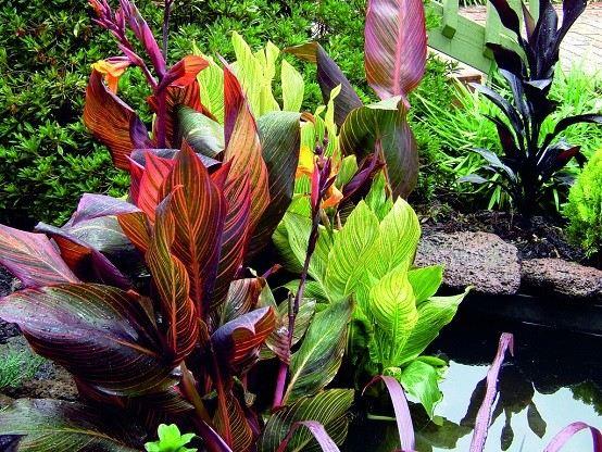 Plantas de exterior ideas para un jard n de ensue o - Plantas tropicales de exterior ...