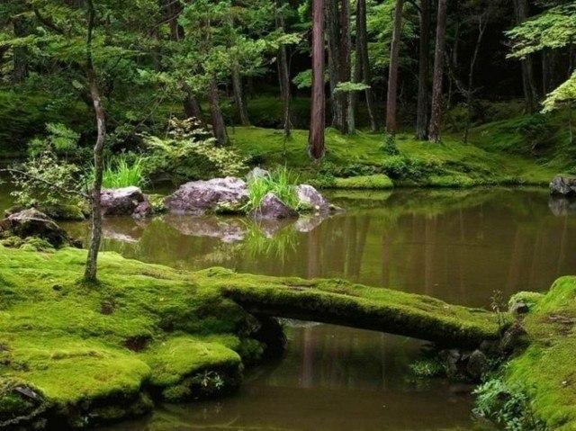 folosofia zen diseño jardin moho lago grande