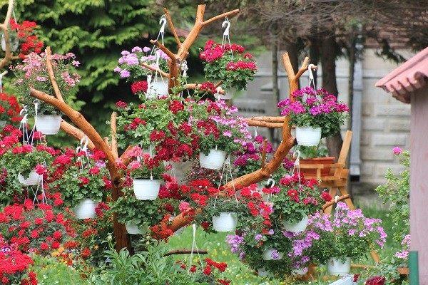 geranios macetas colgantes jardin rojos