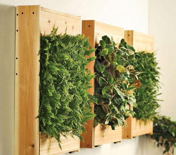 helechos pared verde muro madera diseño