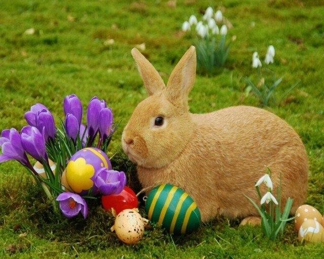 huevo pascua plato conejo fiesta