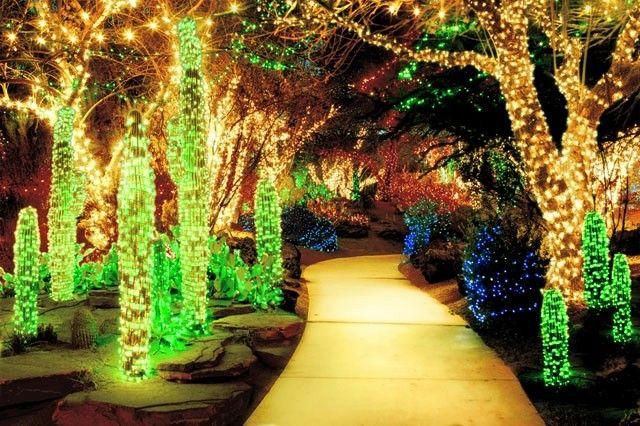 jardin iluminado arboles plantas camino