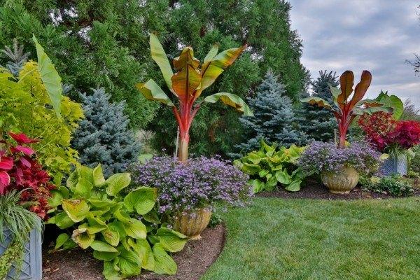Paisajes naturales en el jard n del itese con las vistas for Plantas exoticas para jardin