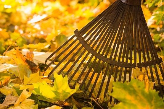 jardines hojas diseño jardineria liempieza