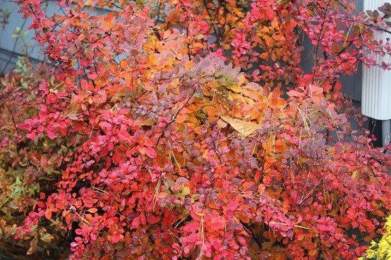 jardines otoño planta jardin muebles
