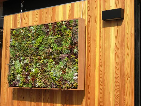 jardines verticales pared madera muro suculentas