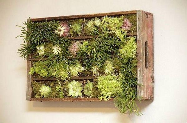 jardines verticales plantas colores caja madera