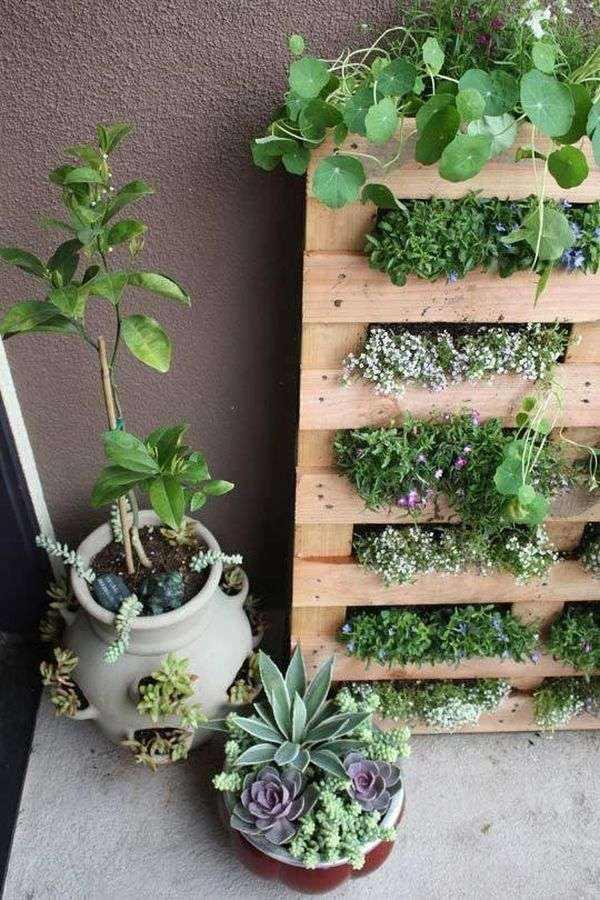 jardines verticales terraza suculentas palet macetas