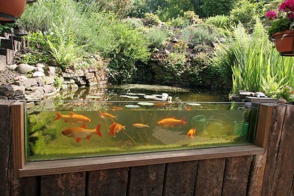Lagos y piscinas naturales para el jard n for Plantas para estanque peces koi