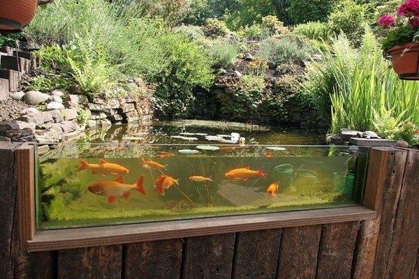 lago estanque acuario pecera