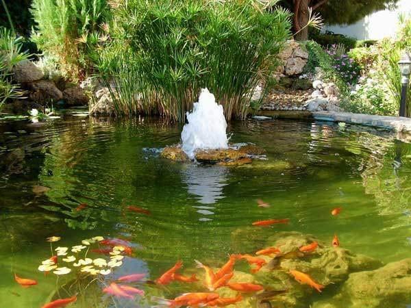 Lagos y piscinas naturales para el jard n for Fuentes con peces