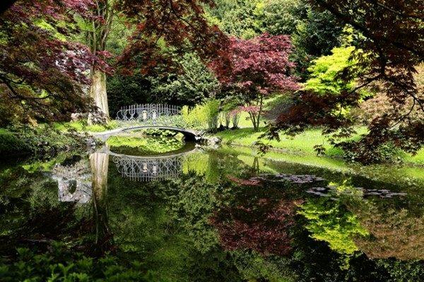 lago estupendo bosque frondoso colores