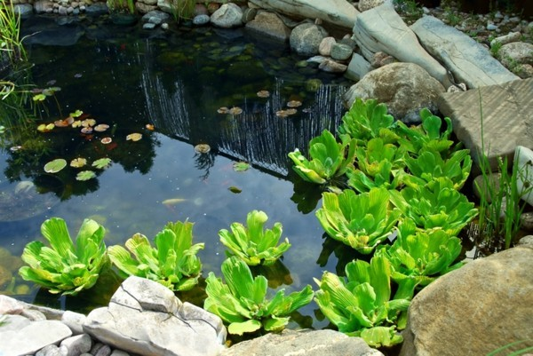 lago natural decorativo link plantas