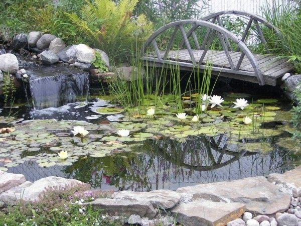 lagos jardín flor loto puente