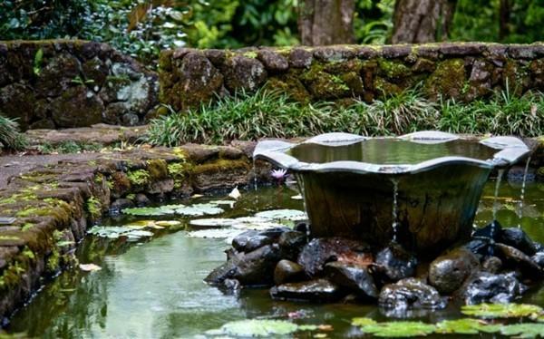 lagos naturales fuente flor loto