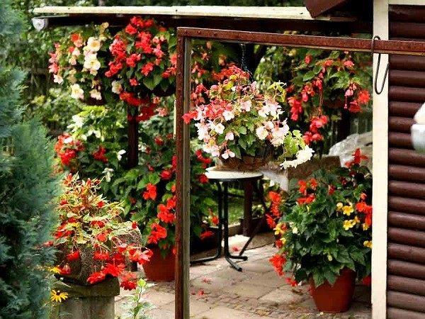 macetas geranios rojos jardín