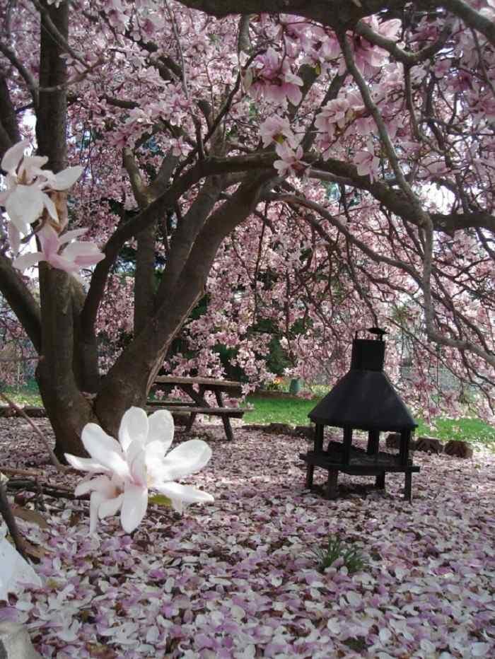 magnolia florece jardin precioso ambiente