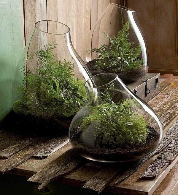 manualidades originales germinadero jarrones vidrio