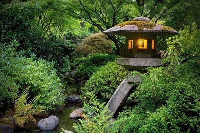 meditación zen variedad plantas arbustos