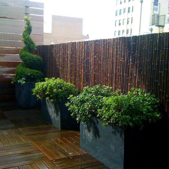 moderno bambu cerca vaya contenedores plantas