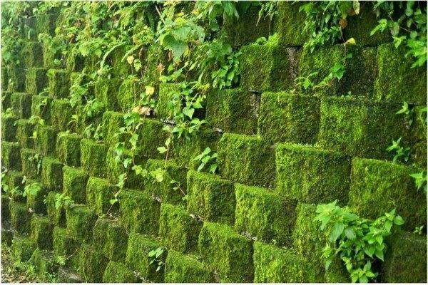 musgo piedras paisaje natural verde