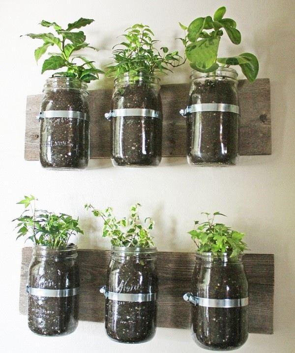 originales vidrio envases plantas pared