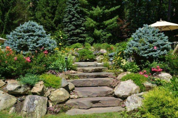 paisaje jardin escaleras pinos rocas