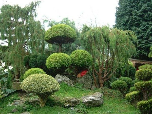 natural landscapes gardening pruned round