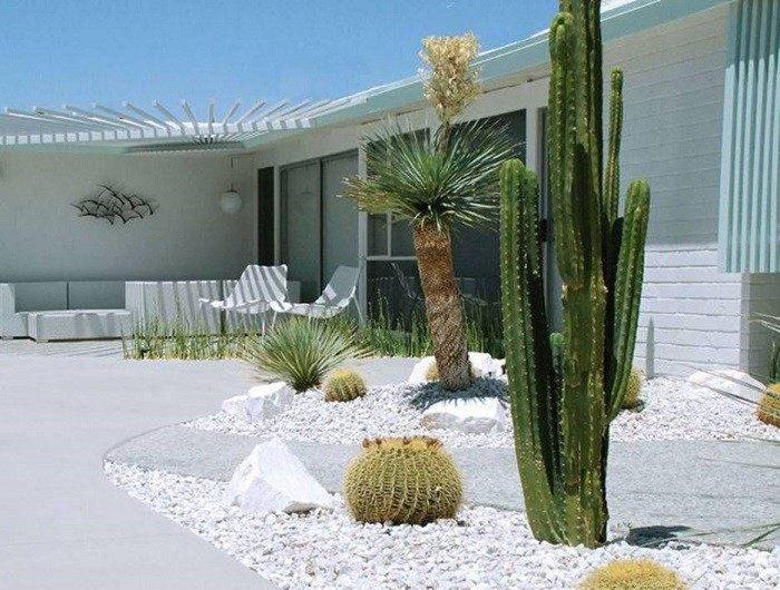 paisajismo con plantas de exterior grava cactus