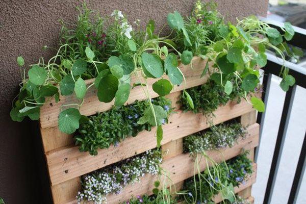 Jardines verticales crea tu oasis con ideas diy - Variedades de plantas de interior ...