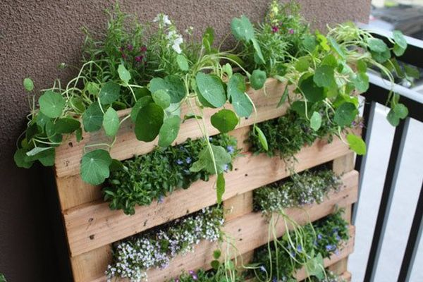 palet plantas interior terraza colgantes