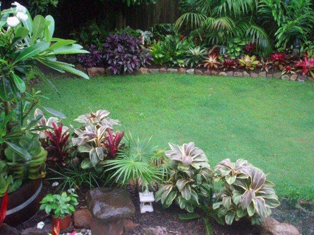 cesped jardin palmeras flores plantas